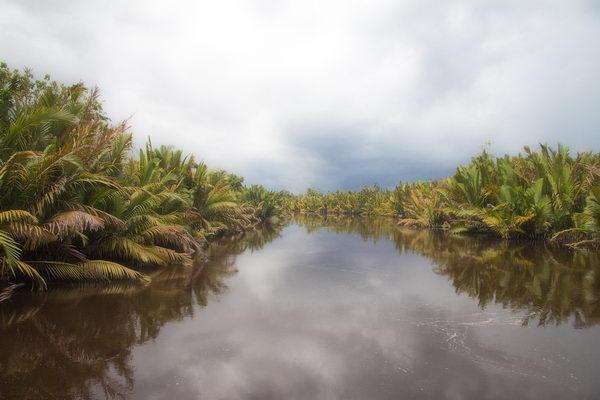 อุทยานแห่งชาติทันจังพุตติง Tanjung Puting อินโดนีเซีย