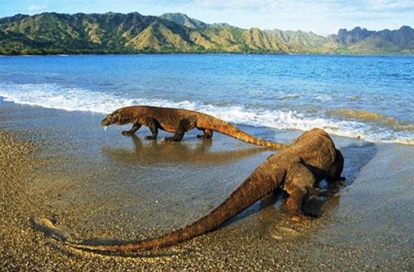 อุทยานแห่งชาติโคโมโด Komodo National Park อินโดนีเซีย