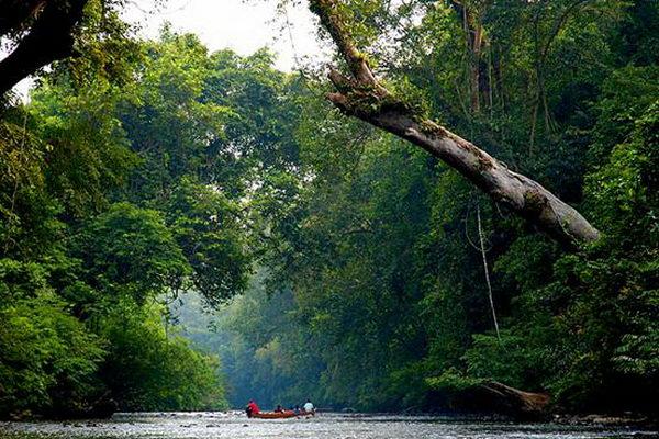 อุทยานแห่งชาติทามันเนกะระ Taman Negara มาเลเซีย