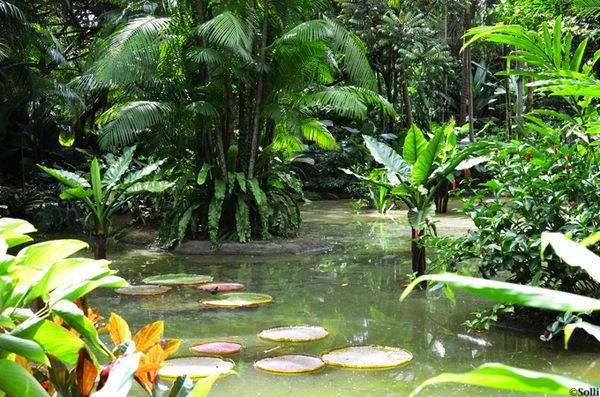 สวนดอกไม้ Botanical Gardens สิงคโปร์